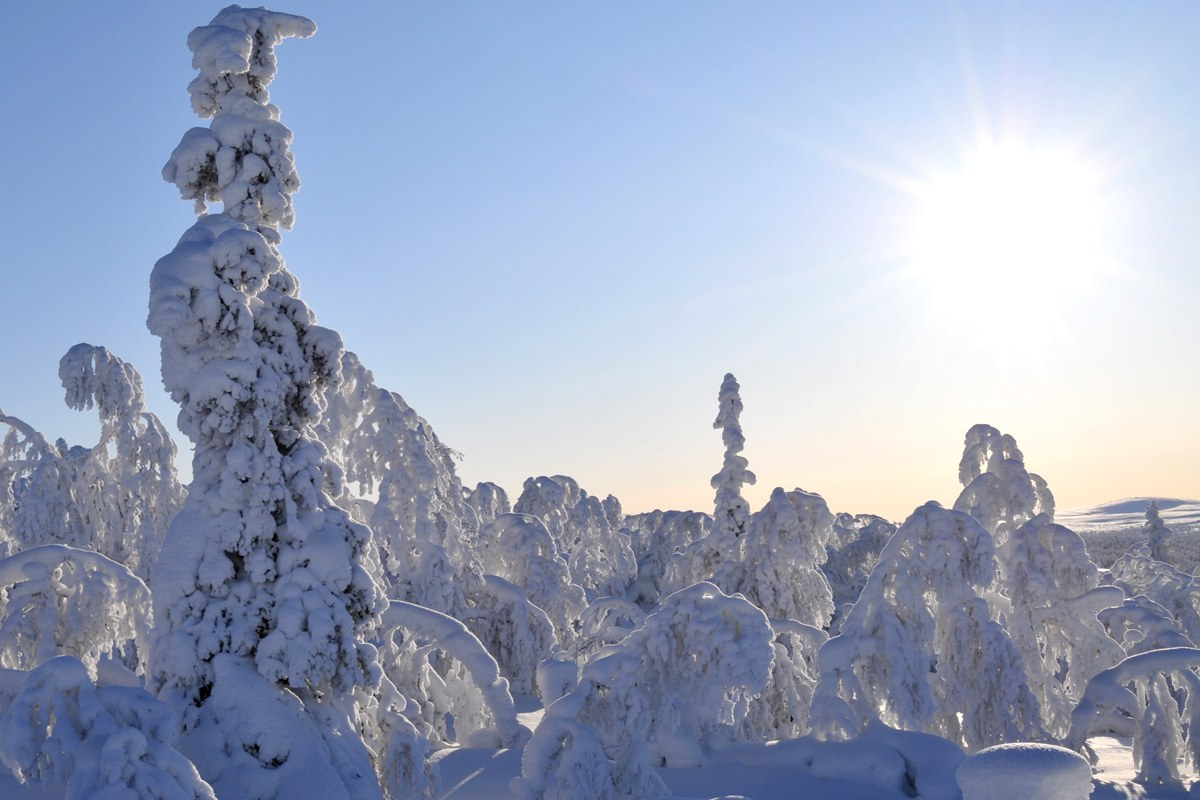 Spectaculaire incentive reis naar Lapland