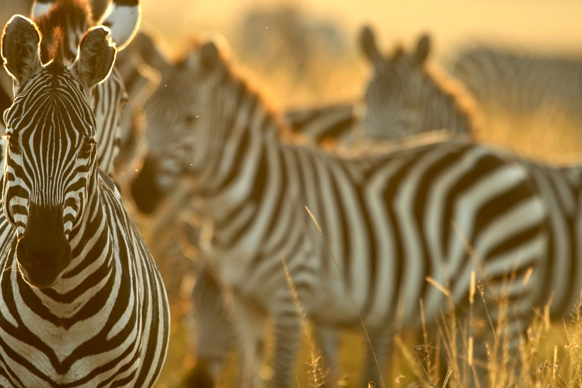 Kenia | avontuurlijke safarireis | 5 dagen