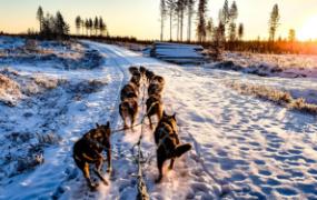 Incentive reizen naar Lapland