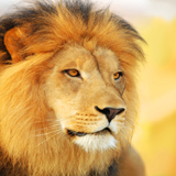 Special Safari Shortbreak Incentive!