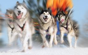 Incentivereis naar Lapland: een topreis!