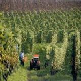 Vergader incentive Maastricht: wijnproeven, grotdiner, thermen